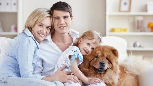 Wills & Trusts dog-young-family Direct Wills Coombe Bissett